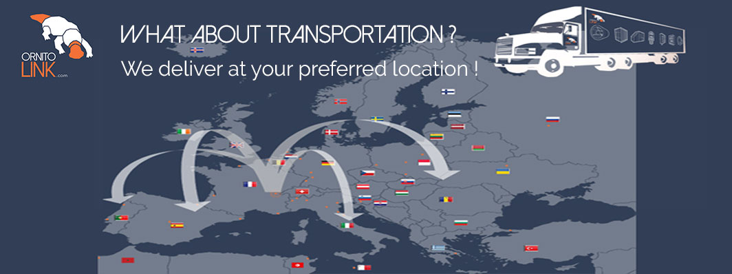 transportation-solutions-in-europe